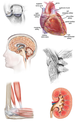 medical_illustrations